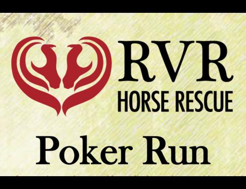 "A Poker Run with true ""Horse Power"""